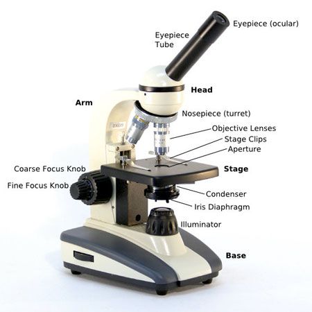 compound-microscope-parts-diagram
