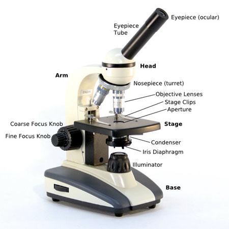 compound-microscope-parts-diagram