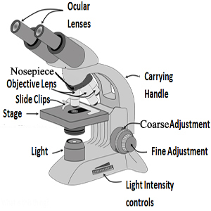 labeledmicroscopeimage