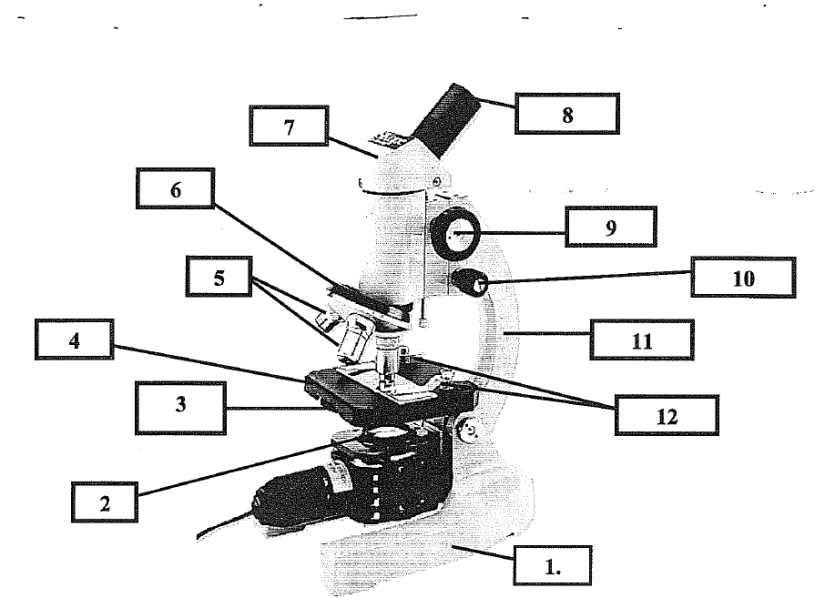 microscope parts label